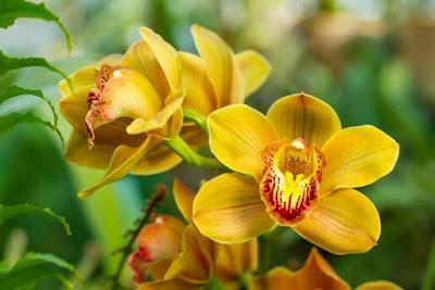 Plantar orquídeas en su jardín