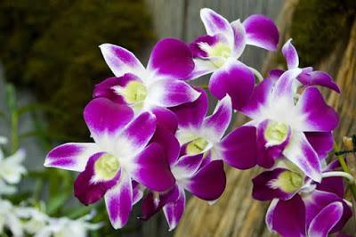 Flores que llenan de color su jardín