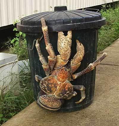 Este es el cangrejo más pesado del mundo