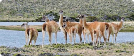 La estepa patagónica, naturaleza en vivo y el viento que barre un espacio sin fin.