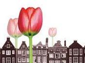 Crisis Tulipanes