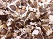 Moringa Olifera: para sirve, Propiedades, Usos Cultivo