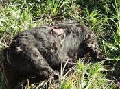 Aparece perro decapitado Miguel Tabagón