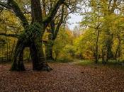 bosque Robles Milenarios Danbulintxulo