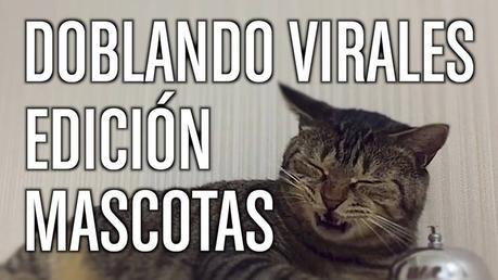 Edición Mascotas