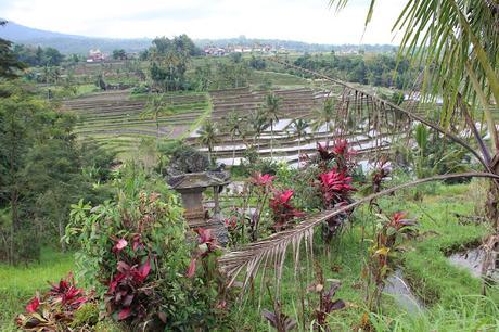 INDONESIA VII: SEGUIMOS EL TOUR
