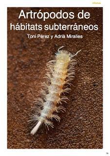 Artrópodos de hábitats subterráneos