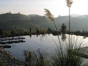 Biopiscinas, piscinas ecológicas sostenibles