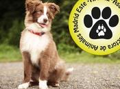 conocemos APAME, Asociación Protectora Animales Madrid Este