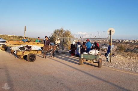 Israel ayuda a los palestinos en la recolección de aceitunas.