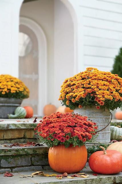 Las calabazas son para el otoño