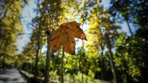 De repente, otoño