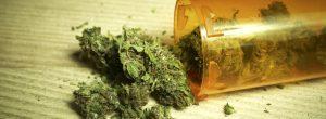 La marihuana y el sistema inmunológico