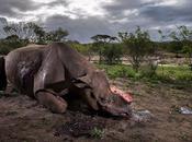 Impresionantes fotos ganadoras concurso anual vida silvestre 2017