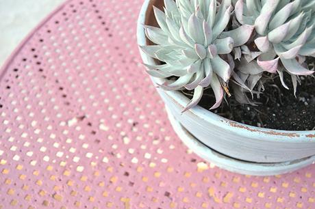 Cómo cuidar tus plantas, la guía