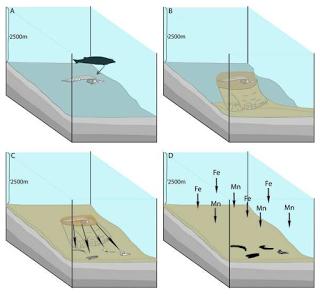 ¿Hay fósiles en el abismo?