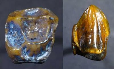 ¿Los Homínidos Se Originaron En Africa? Descubren Diente de Homínido En Alemania de 9,7 Millones de Años