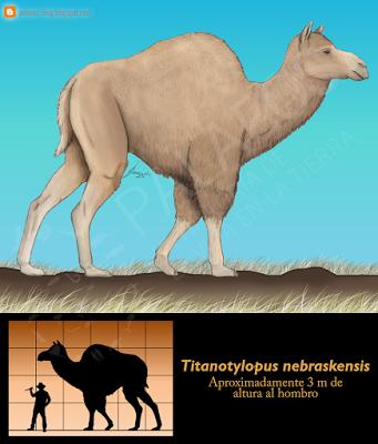 Paleoficha: Titanotylopus nebraskensis