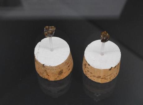 Misteriosos dientes fósiles descubiertos en Alemania desconciertan a los científicos