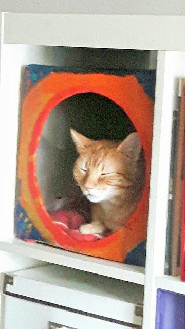 Refugio para gatos