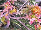 Enfermedad Aloe vera. Cáncer aloe