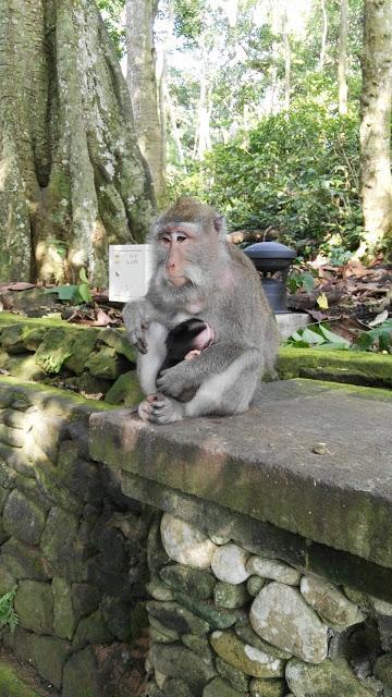 INDONESIA VI: QUÉ VER Y QUÉ HACER EN UBUD