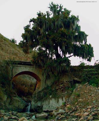 Postales de mi tierra: el árbol de la vida