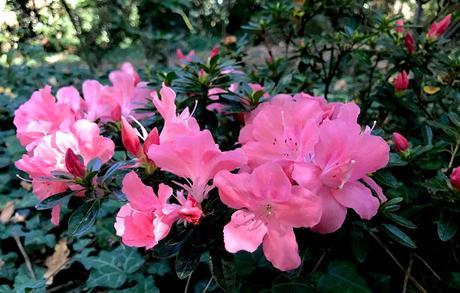 ¡El jardín florido en otoño! The flower garden in autumn!