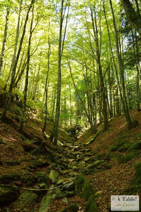 Sendeando por la Selva de Irati y Fábrica de Orbaitzeta