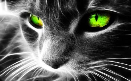 El gato te protege a ti y a tu hogar de fantasmas y espíritus negativos