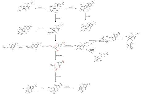 metabolitos fipronil