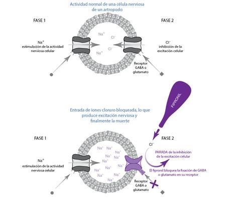 mecanismo de acción del fipronil
