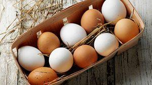 Fipronil, manda huevos