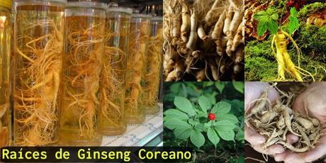El milagro asiático! Conoce todo sobre el ginseng coreano, una poderosa planta