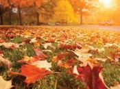llegó otoño