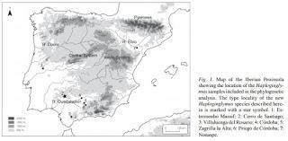Importantes hallazgos en el medio subterráneo de Sevilla
