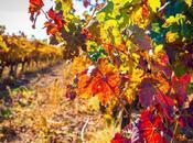 vides rojas, seguimos buscando colores otoño