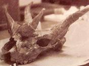 Paleoficha: Giraffokeryx punjabiensis
