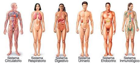 Sistemas del cuerpo humano