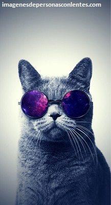 imagenes de gato con lentes wallpapers