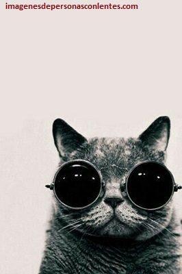 imagenes de gato con lentes psicodelicos