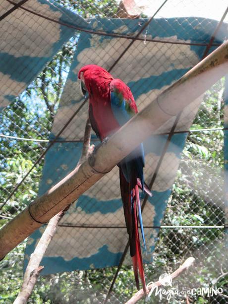 Güira Oga: refugio de animales silvestres
