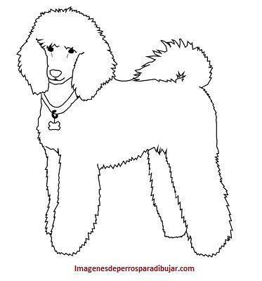 Aprende Rapido Como Dibujar Un Perro Caniche O Poodle Tierno Paperblog