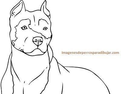 Imagenes De Perros Pitbull Para Colorear O Calcar Y Pintar Paperblog