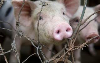 El autobús «Pork Lovers» promueve la violencia contra los cerdos