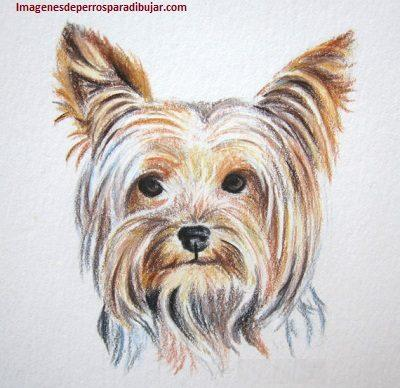 Best Imagenes De Dibujos De Perros A Color Image Collection