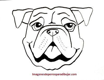 Faciles Dibujos Tiernos De 4 Caritas De Perros Para Dibujar Paperblog