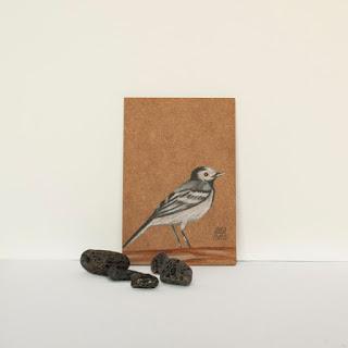 Il·lustració Ocell Cuereta blanca Ilustración pájaro