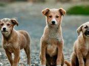 Dermatitis atópica perros