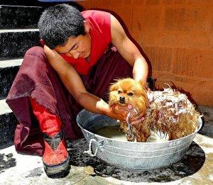 perro_lavándose